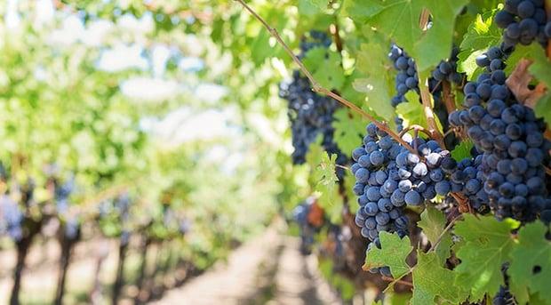 Boom per l'export di vino italiano - ALYANTE Blog