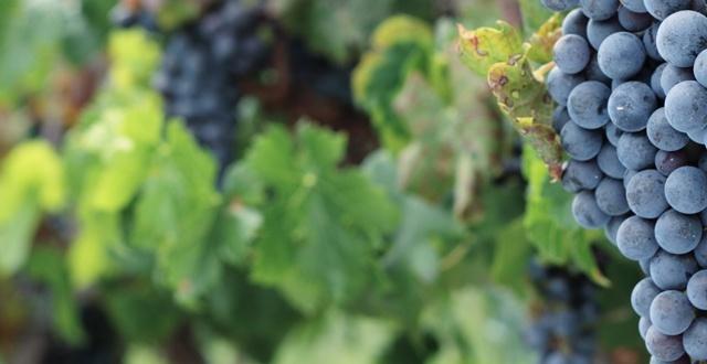 White paper: Aziende vitivinicole e Vantaggio competitivo